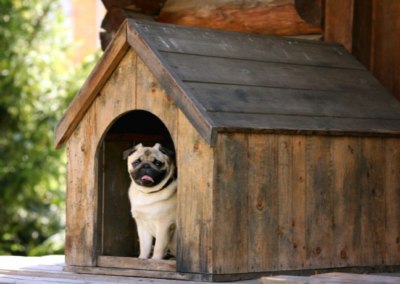6 Smart Ways to Pet-Proof Your Pet-Friendly Vacation Rental